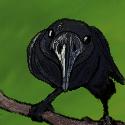 Ninabird