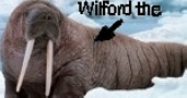 Wilford The Walrus