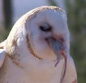 view BarnOwl's profile