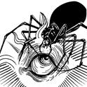 Spinneret