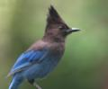 view StellarJay's profile