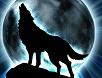 Wildwolf42