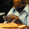 view Alf The Cat Lover's profile